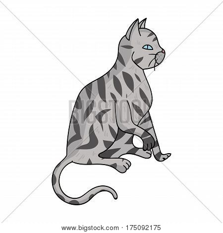 American Shorthair icon in cartoon design isolated on white background. Cat breeds symbol stock vector illustration.