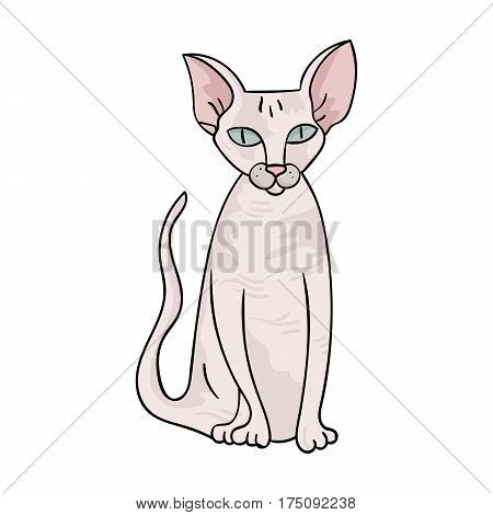 Peterbald icon in cartoon design isolated on white background. Cat breeds symbol stock vector illustration.