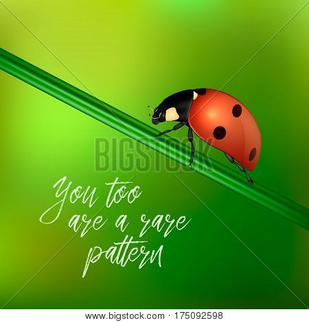 Yoy too are a rare pattern - vector background with quote and realistic ladybug insect on a blurred green. EPS10 illustration.