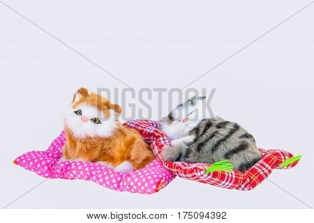 Pets Animal Domestic Animals Domestic Cat Feline