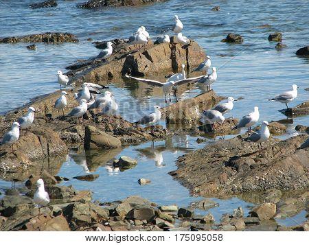 SEA GULLS RESTING ON SOME ROCKS