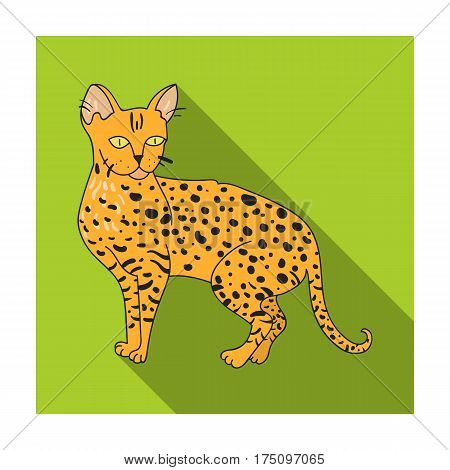 Savannah icon in flat design isolated on white background. Cat breeds symbol stock vector illustration.