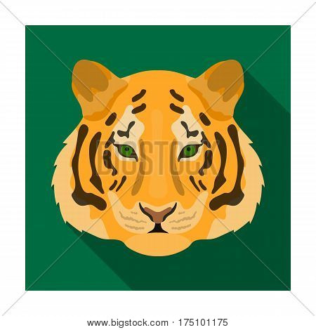 Tiger icon in flat design isolated on white background. Realistic animals symbol stock vector illustration.