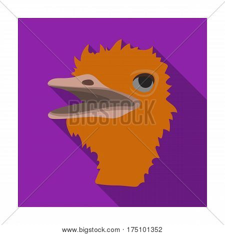 Ostrich icon in flat design isolated on white background. Realistic animals symbol stock vector illustration.