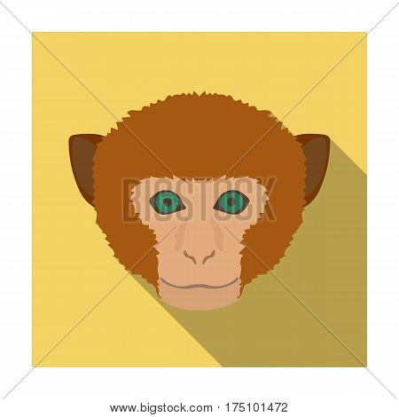 Monkey icon in flat design isolated on white background. Realistic animals symbol stock vector illustration.