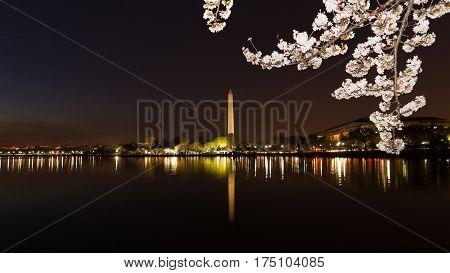 Washington Monument across Tidal Basin during cherry blossom festival Washington DC. Washington Monument on dark blue night sky background in the dusk.