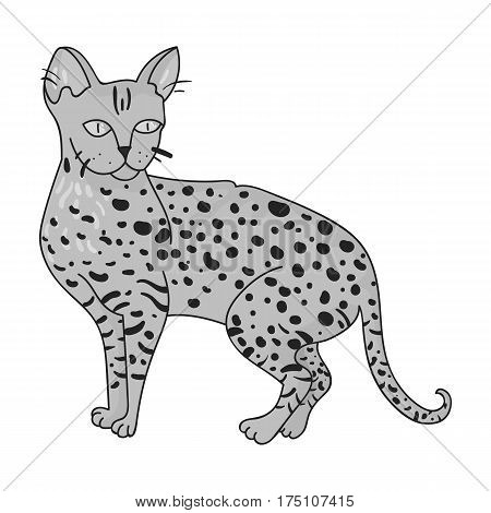 Savannah icon in monochrome design isolated on white background. Cat breeds symbol stock vector illustration.