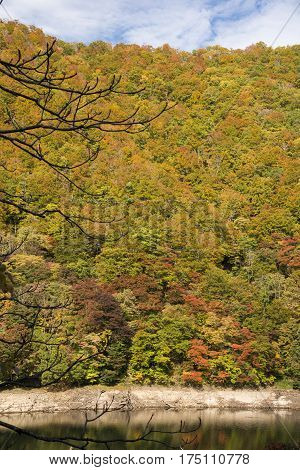 Autumn colorful forest on lake side hill in Minakami, Gumna