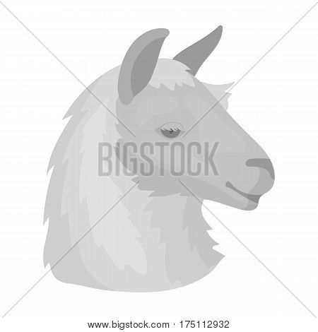 Lama icon in monochrome design isolated on white background. Realistic animals symbol stock vector illustration.