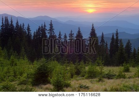 Spruce forest in the mountains. Summer landscape with colorful sunset. Carpathians, Ukraine, Europe