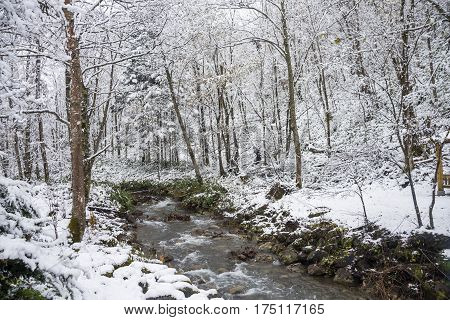 Brook flowing through snowy forest in Biei, Hokkaido