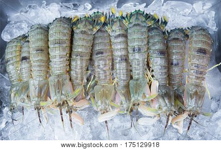 Mantis shrimp with ice in market for sale