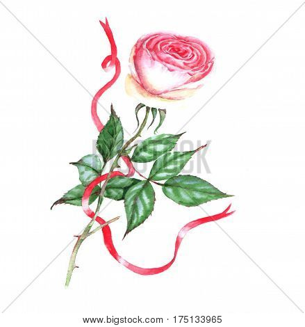 Hand-drawn watercolor illustration of the pink tender rose. Romantic spring floral drawing. Single flower with red ribbon isolated on the white background