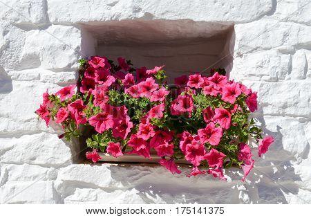 Flowerpot in a window at Alberobello on Italy