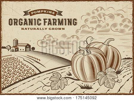 Pumpkin Organic Farming Landscape