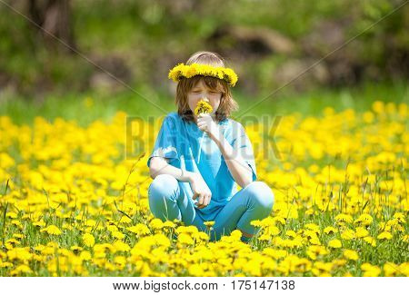 Boy with Blond Hair Smelling Dandelions on a Meadow