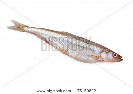 Fresh vendace fish isolated on a white background