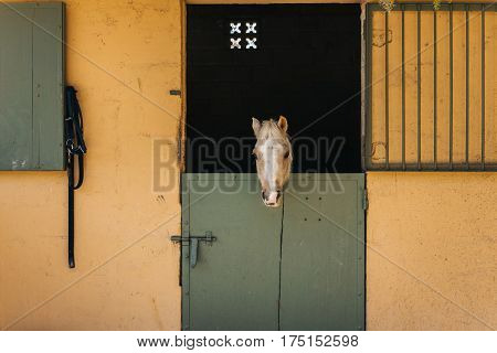 Beige and white pony looks throw window of stable with green door and yellow wall on ranch