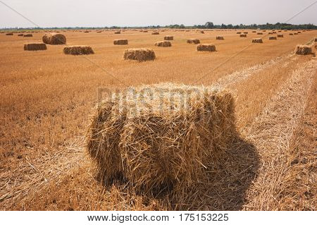 Rectangular hay bale on field. Straw of yellow color. Vasts of homeland. September in the countryside.