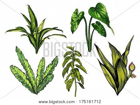Tropical leaves, dense jungle collection hand painted pattern. Vector EPS