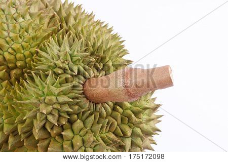 durian  mon thong is king of tropical  fruits  on white background healthy durian fruit food isolated