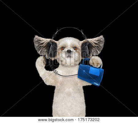 Cute dog with headphone isolated on black background