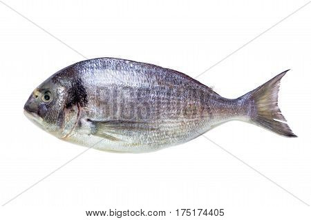 Sea fish dorade isolated on white. top view