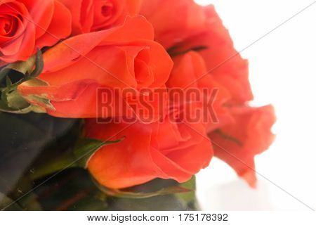Orange Roses Wrapped In Transparent Clear Cellophane.
