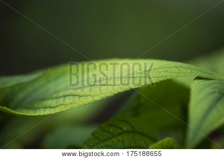 A close-up shot of the edge of a green leaf in summertime.