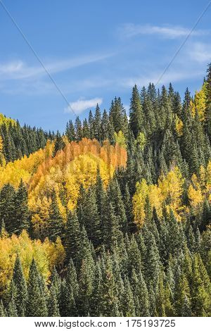 View on San Juan National Forest during golden fall in Colorado
