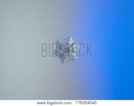 Macro photo of real snowflake: very small snow crystal of sectored plate type with glossy, relief surface and interesting inner pattern, containing small flower-like element in the center and six rows, which divide hexagonal plate to sectors.