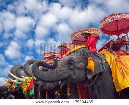 AYUTTHAYA, THAILAND - December 30, 2012: Staff on elephants waiting for tourists in Ayutthaya Historical Park.