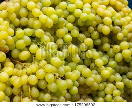 bunch of fresh juicy grapes on the market