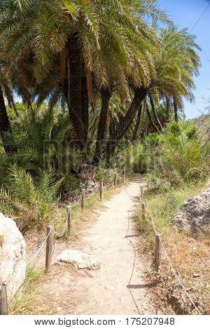 Pathway through Palm forest near Preveli beach in Crete Greece