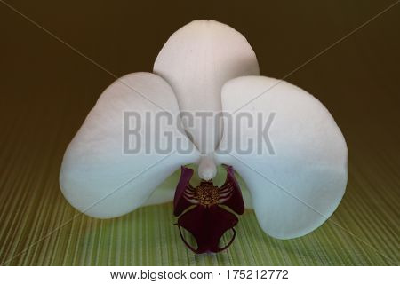 Orchid Blossom Isolated On Green Background