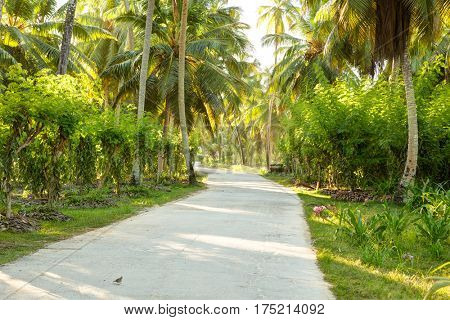 Country road  in sunny morning.   La Digue,  Seychelles