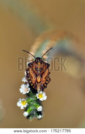 Insect, Isolated bug on naturel background close up