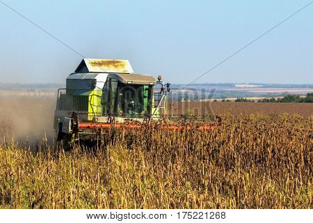 The combine harvests the harvest of sunflower in the field. Ukraine