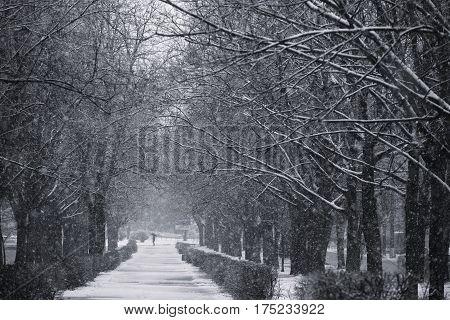 Winter in the park. Bila Tserkva. snow. landscape.