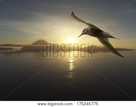 Close-up of seabird against the water landscape and setting sun