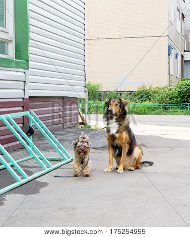 Dogs Near Building
