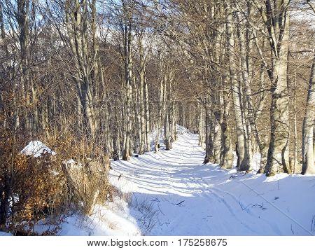 Cimadera Cima Fojorina Switzerland: snowy path through the woods towards Fojorina