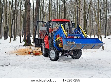 Red wheel tractor in wood or park in winter with log in ladle of blue hinged loader near stub of cut tree