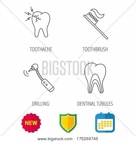 Toothache, drilling tool and toothbrush icons. Dentinal tubules linear sign. Shield protection, calendar and new tag web icons. Vector