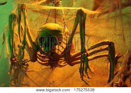 Bones and skulls Halloween decor