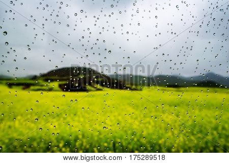 rapeseed flower field with dew drop on glass