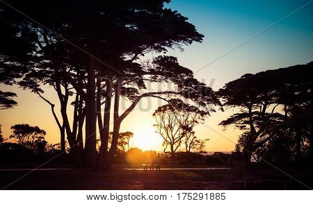 Tree Silhouettes At Sunset On Seashore Landscape.