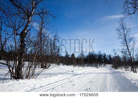 A freshly groomed cross country ski trail