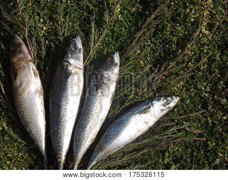 Fish, food, grass, green, sea, grass, weekend, lunch, both, eat,