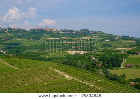 Generic view of Langhe hills on a summer day